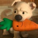 Mr. Carrot