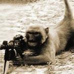 Jihad Monkey